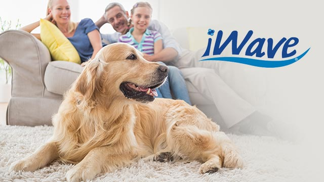 The Best Air Purifier - iWave